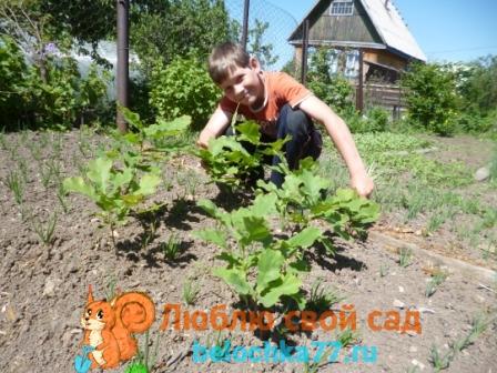 как вырастить дуб