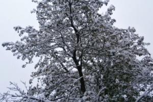 приметы о погоде в ноябре