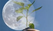 Как Луна влияет на растения, какие работы при разных фазах Луны