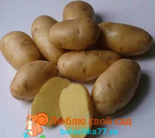 Cорта картофеля фото и описание