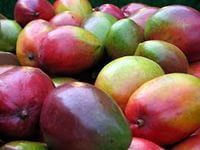 Как посадить манго дома