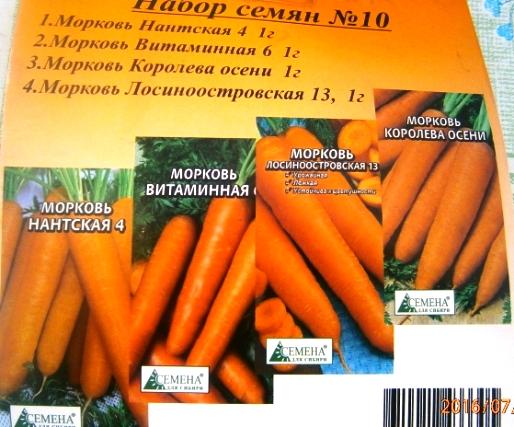 сорта моркови под зиму
