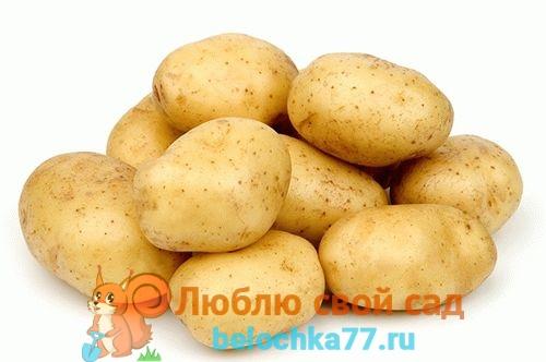 Cорта картофеля  описание и фото