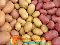 описание и фото сортов картофеля