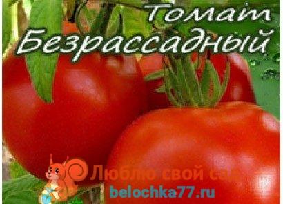 Безрассадное выращивание томатов в теплице и открытом грунте. Сорта с фото