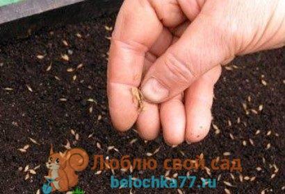 как сеять семена от всей души