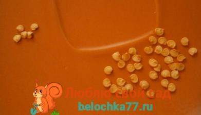 подготовка семян перца к посеву