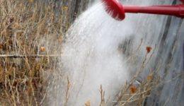 Обработка смородины и крыжовника от вредителей весной