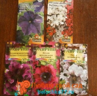 Как вырастить рассаду петуньи из семян