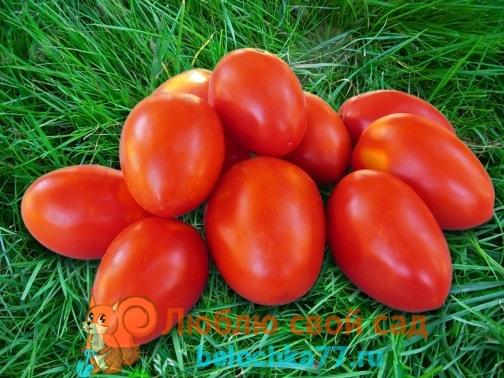 Сорта помидор с фото