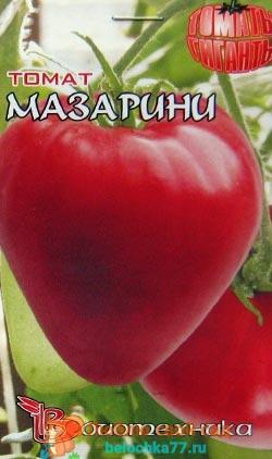 Сорт помидора Мазарини