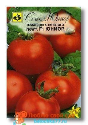 помидор Юниор