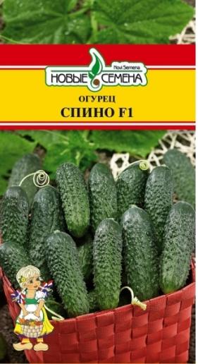 Сорт огурцов Спино