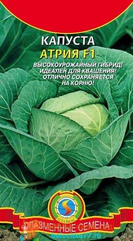 Лучшие сорта капусты белокочанной фото названия