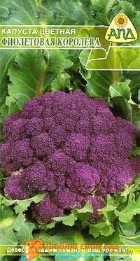 Сорт Фиолетовая Королева
