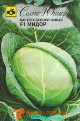 Лучшие сорта капусты белокочанной с фото и названиями