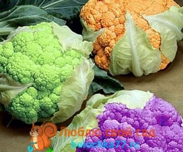 Употребляют ли в пищу вместе с цветной капустой окружающие ее листья