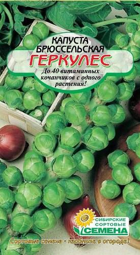 Выращивание брюссельской капусты посадка и уход