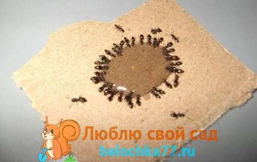 муравьи - как уничтожить