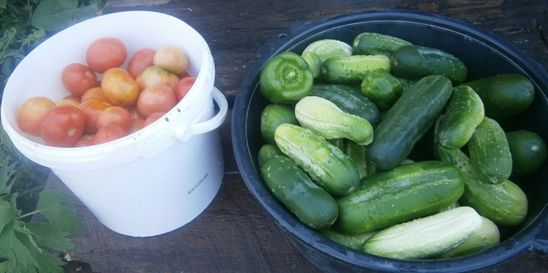 Ассорти: огурцы и помидоры