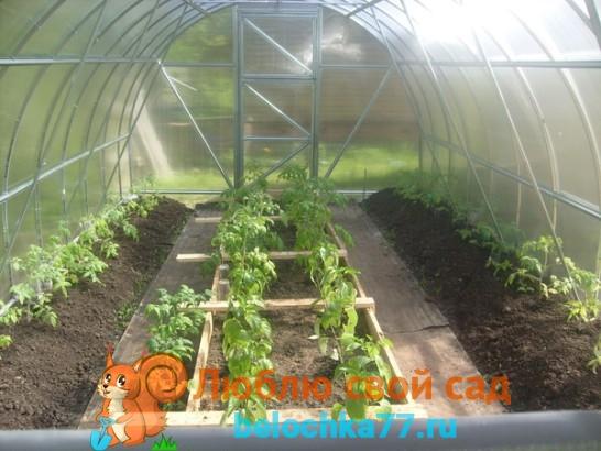 Выращивание помидор в теплице из поликарбоната