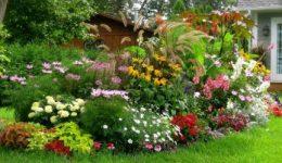 Неприхотливые среднерослые многолетники для дачи, цветущие всё лето