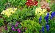 Первоцветы с фото и названиями