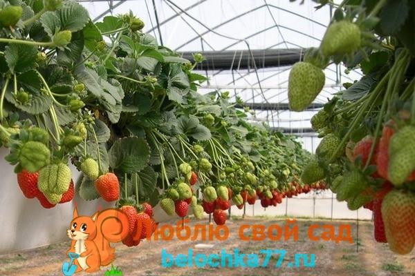 Выращивание в ткплице круглый год