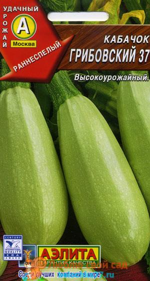 Популярные сорта кабачков