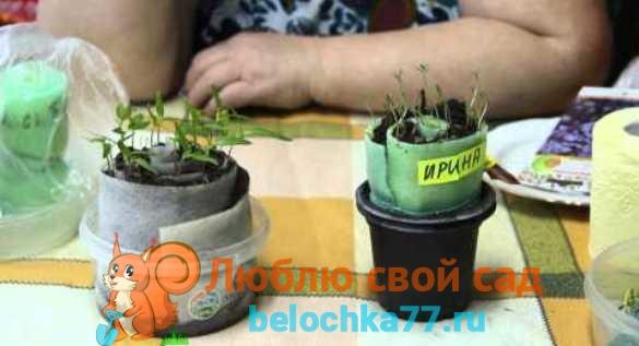 Выращивание в улитке
