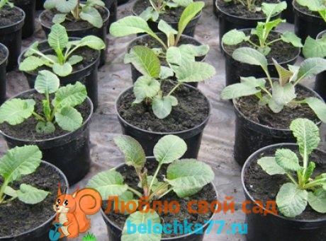 Посев и уход за рассадой, когда сажать