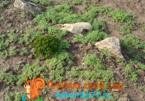 Посев семян сразу в открытый грунт