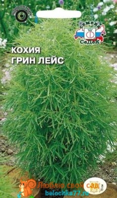 Семена Кохия веничная Грин лейс