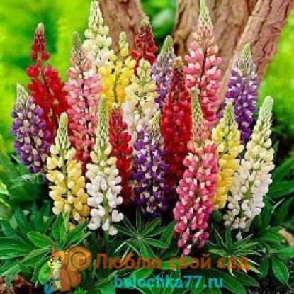 Болезни и вредители уход за цветком