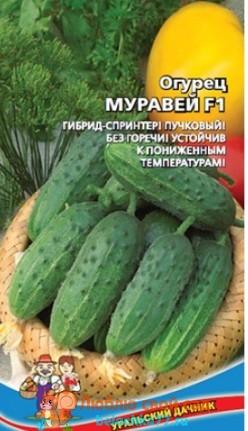 Сорт огурцов Муравей F1