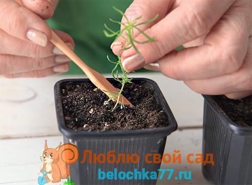 Выращивание рассады из семян в домашних условиях