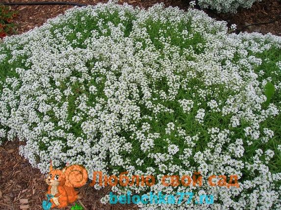 Посев семян в открытый грунт весной