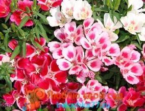 фото весенних луговых цветов