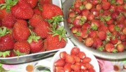 Обработка клубники весной от вредителей и болезней