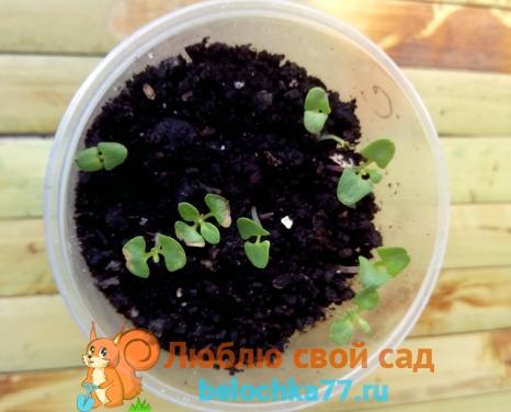 Подготовка семян и земли