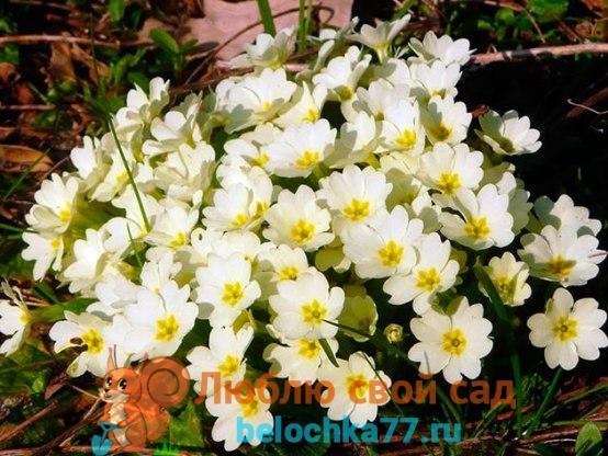 Что делать после цветения
