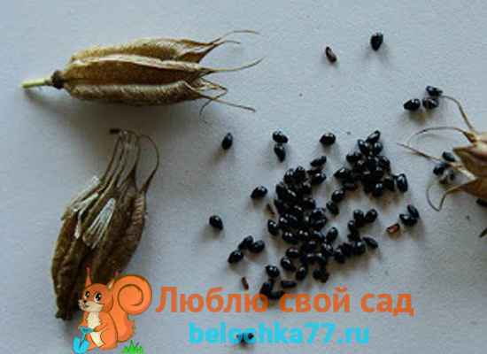 Как собрать свои семена