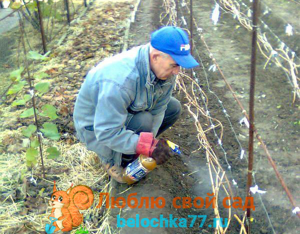 Когда проводить обработку винограда весной, сроки