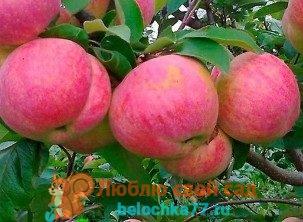 Как обрезать яблоню весной правильно - подробное руководство