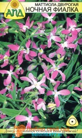 Маттиола выращивание из семян когда сажать