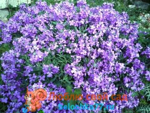 Уход за цветами летом