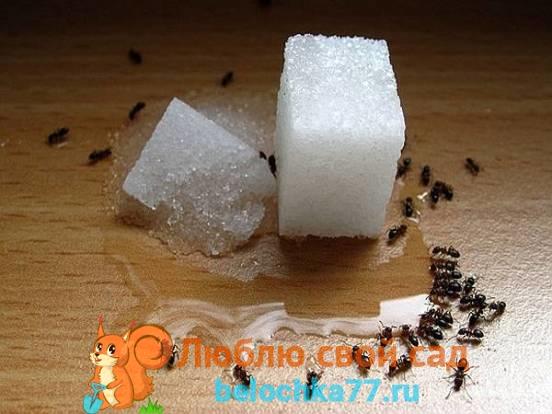Уничтожение маленьких муравьев с помощью использования инсектицидных средств