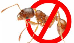 Как избавиться от муравьев в квартире. От домашних, рыжих маленьких муравьев