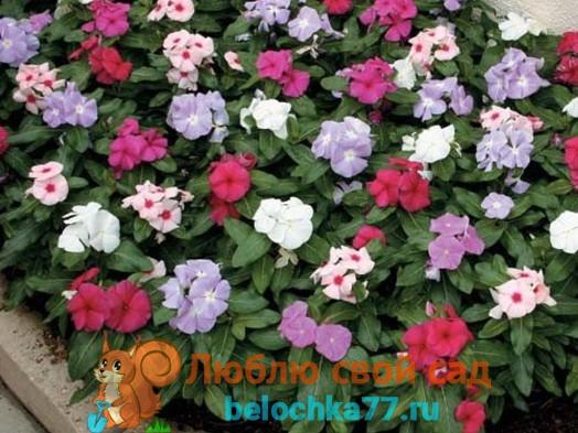 Уход за цветами в открытом грунте