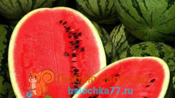 Арбуз – это ягода, фрукт или овощ?